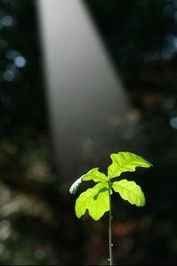 Feuille lumière vie