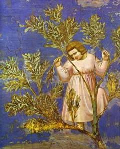 Zachée - Giotto