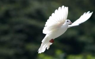 """Retraite préparatoire à la fête de la Sainte Trinité (3) : """"L'Esprit Saint procède du Père et du Fils…  Il est Seigneur, et il donne la vie."""""""
