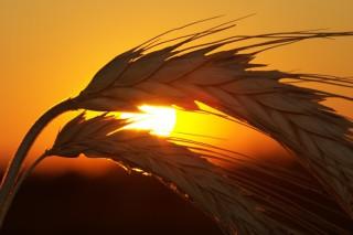 5ième dimanche de Carême par P. Claude TASSIN (Spiritain)