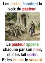 « Les brebis écoutent sa voix… » (Jn 10,1-10 ; 4° Dimanche de Pâques – Francis COUSIN)