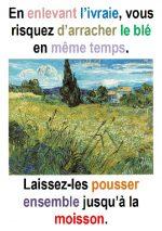 16ième Dimanche du Temps Ordinaire (Matth 13, 24-43) – Francis COUSIN)